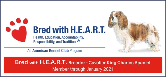 Cavaliers By Val - Cavalier Adoption In Cape Coral, Florida 33990 -  ADOPTION FEE